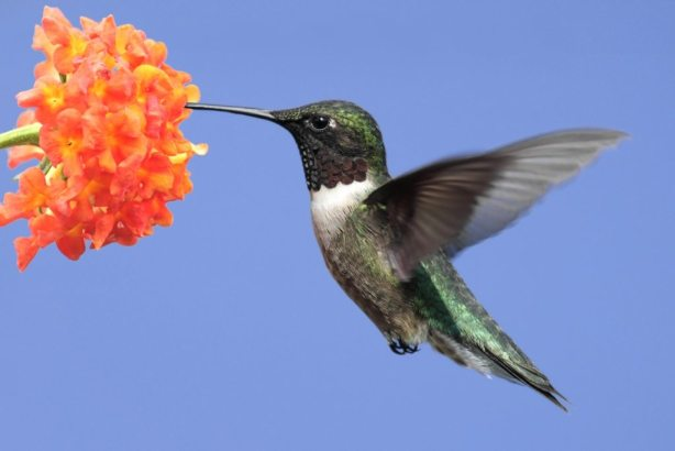 Website Content for Contractors-Hummingbird Effect