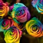 rosas_coloridas (1)