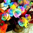 rosas_coloridas (5)