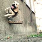 TreT: o cachorro que faz parkour