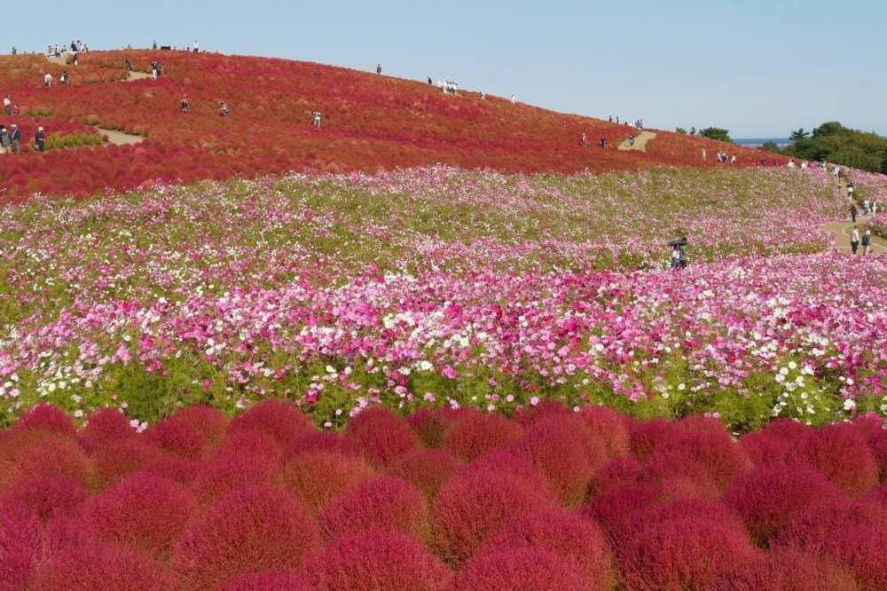 31f5fe06d0fb69bf38e5fe3df550f3e3 紅葉ランキング茨城の公園が世界一に反発の絶景画像