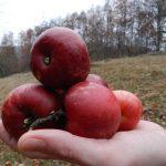 Biztosan nem tudtad! Mi történik, ha egy almát teszel a levesbe?