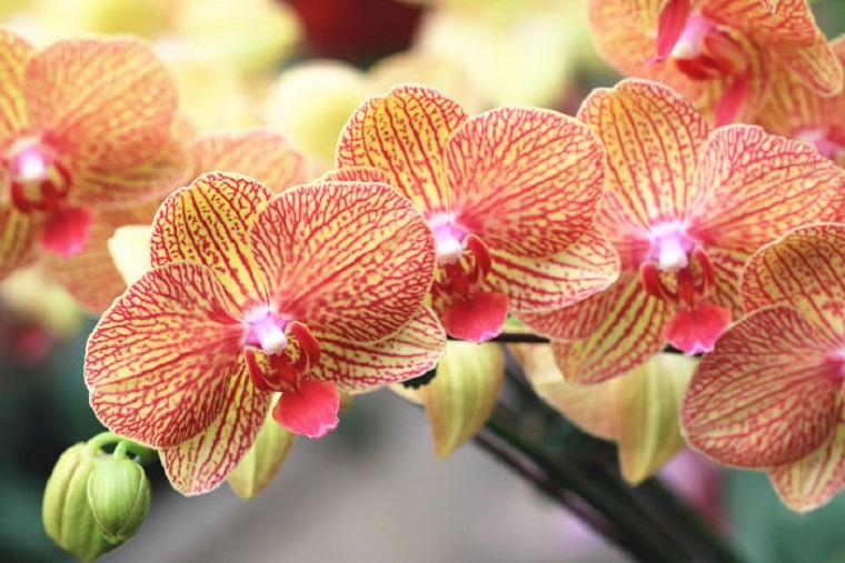 te-orchidead-sem-viragzik-erre-van-szuksege-ahhoz-hogy-viragozzon