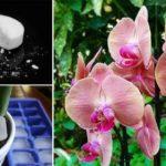Hogyan gondozd az orchideát, hogy egészséges legyen és rengeteg virágot hozzon?