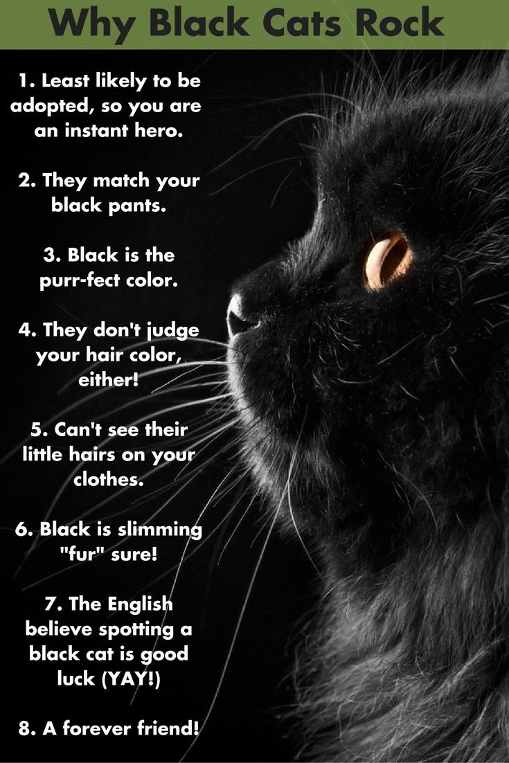 Warrior Cats Wallpaper With Quotes Wordless Wednesday Blog Hop Black Cat Appreciation Day
