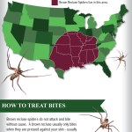 Brown Recluse Infographic