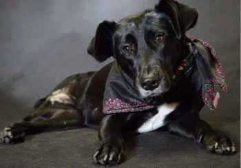 Deficientes, pretos e com mais de 6 meses: os pets que sobram nos abrigos