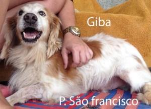 GIBA-saofrancisco
