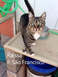 RAISSA_SaoFrancisco