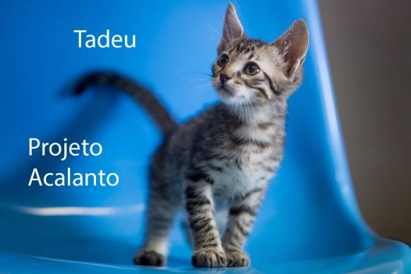 TADEU_acalanto