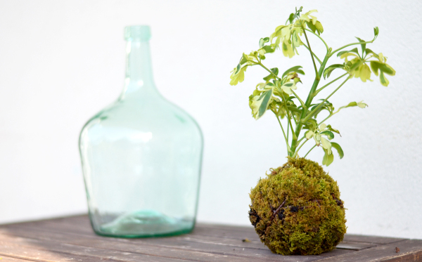 Top 10 Interieur Blogs Diy : Créer Un Kokedama | Le Top Des Blogs Maison