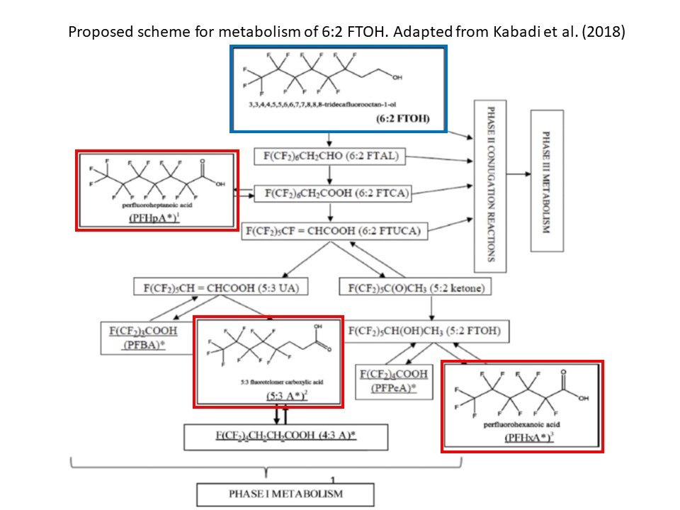 The elephant in the room potential biopersistence of short-chain PFAS