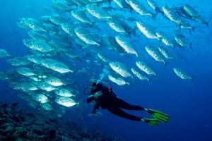 Chile amplia a proteção das áreas marinhas