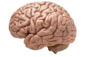 cerebro-funiber