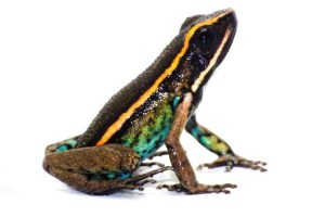 funiber-nueva-especie