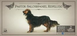 protesta-creativa-adopcion-perros-razas-unicas-02