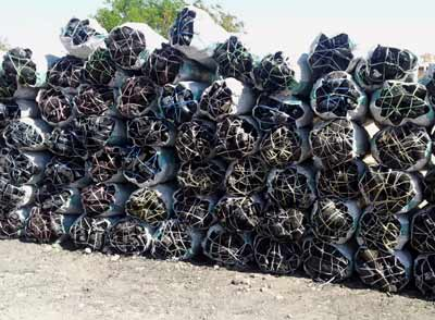 Charcoal exports are destroying Somalia's environment
