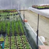installation d un syst me d irrigation par micro aspersion le blog de l 39 exploitation les. Black Bedroom Furniture Sets. Home Design Ideas