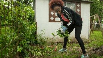 student pulls weeds
