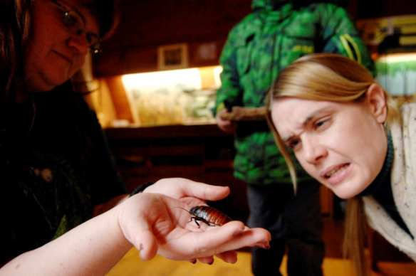 NICK SCHNELLE/JOURNAL STAR  Courtney Kerley of Bartonville holds up a Madagascar hissing cockroach as naturalist Christina Kiefer inspects the insect for a missing leg during the Animal Encounter at Forest Park Nature Center.