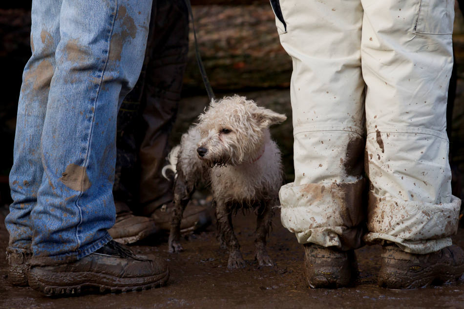 "A pet dog stands in the mud during the annual Tough Guy race - ""the toughest race in the world"" - at Perton in Staffordshire, England, Sunday Jan. 26, 2014. Tough Guy claims to be the world's most demanding one-day survival ordeal. First staged in 1987, the Tough Guy Challenge has been widely described as one of the hardest races of it's type with up to one-third of the starters failing to finish in a typical year. (AP Photo/Jon Super)"