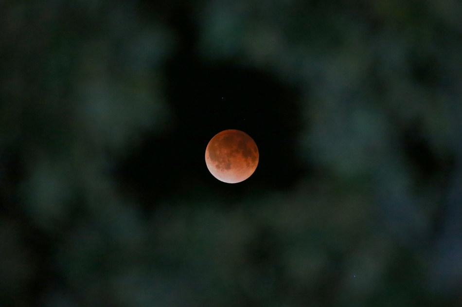 The Earth's shadow is cast over the surface of the Moon as a total Lunar Eclipse is seen though a Magnolia tree top in the sky over Tyler, Texas at 12:56 CDT  on Tuesday morning, April 15, 2014.   (AP Photo/Dr. Scott M. Lieberman)