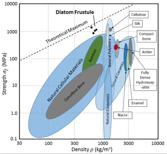 Beams Built of Diatom Boast Record-Setting Strength - Scientific