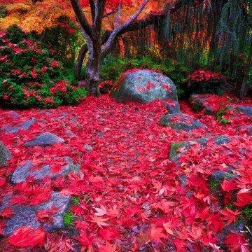 RED FALL LEAVES by Joseph Linaschke