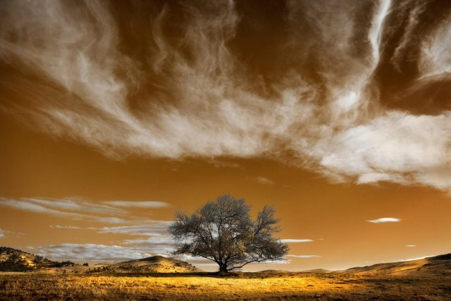 Ashland Gallery Association Exhibits - April 2016The Tree of Hope_PhotographersGallery