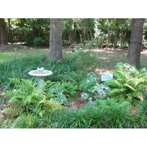 Medium Crop Of Rain Garden Plants