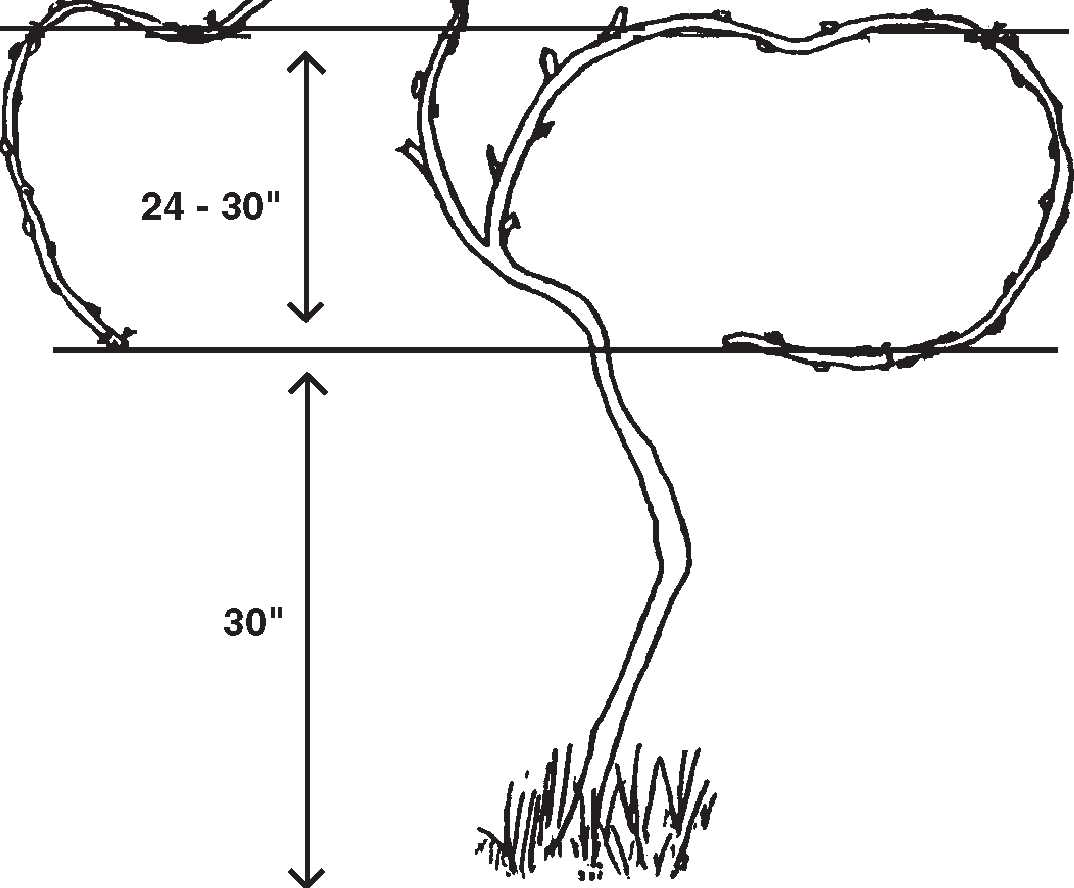 artificial levee diagram
