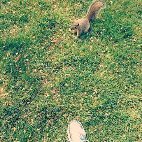 the squirrels have been AGGRESSIVE in the park this week!
