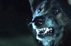 ThePack_WolfSnarl1