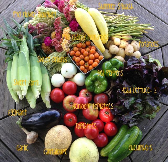 7/28/15, on-farm share #9