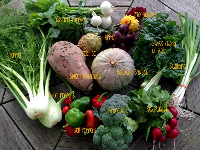 10/13/15, on-farm CSA share #20, week B