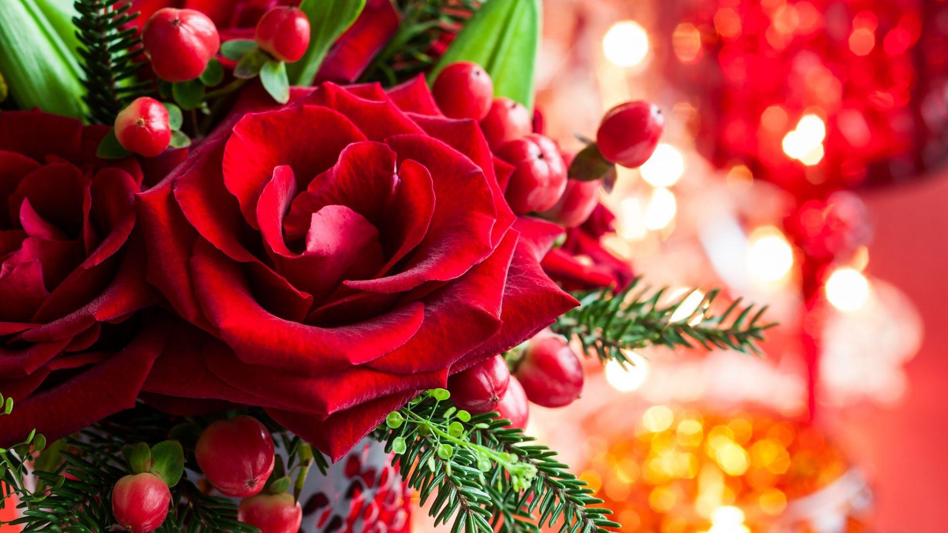 Wallpaper Images Hd Flowers Magic Love Bokeh Red Xmas Roses Merry Rose Christmas