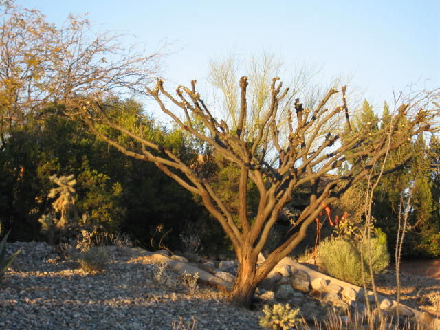GV Gardeners Tree topping harmful, not recommended Get Out