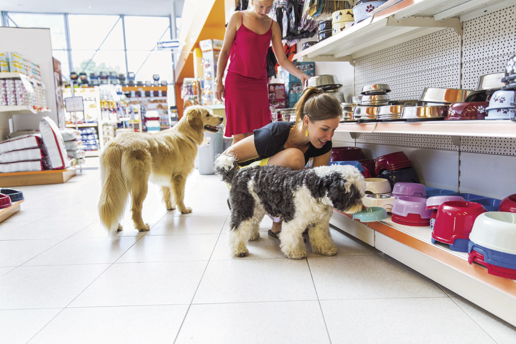Pet Store Cockburn There Are Rules For Shopping With Fido Even In Pet Friendly