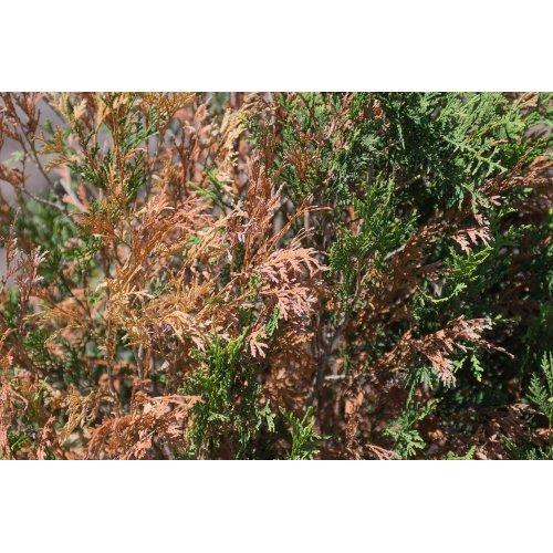 Medium Crop Of North Branch Nursery