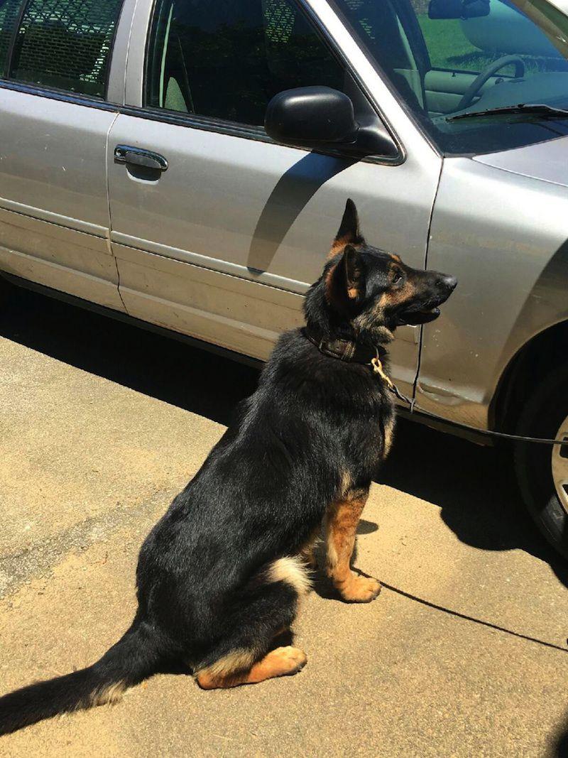 Large Of Police Dog Breeds