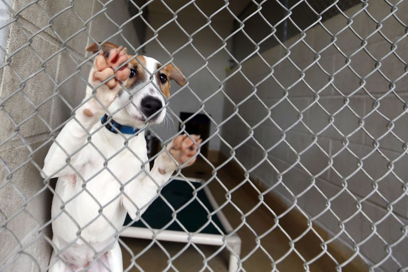 Winsome Napa County Animal Shelter Proposed Initiative Would Reduce