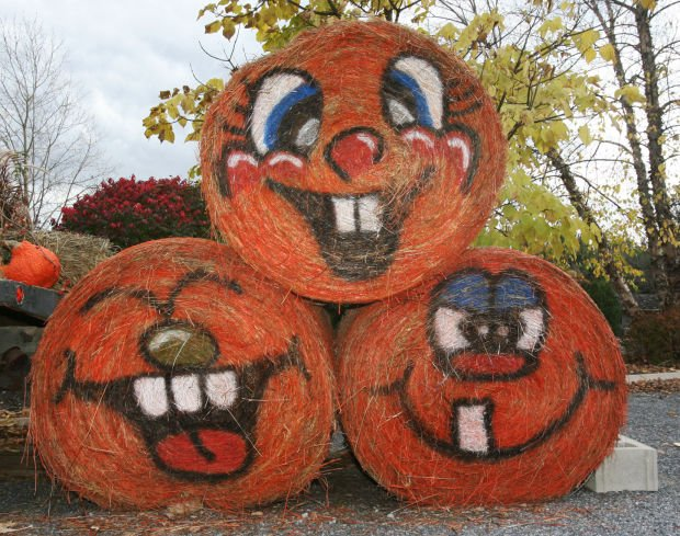 Fall Pumpkin Wallpaper Who Says Hay Is Just For Horses Nursery Staff Creates Art