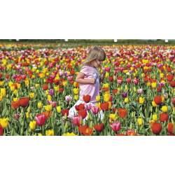 Small Crop Of Holland Bulb Farms