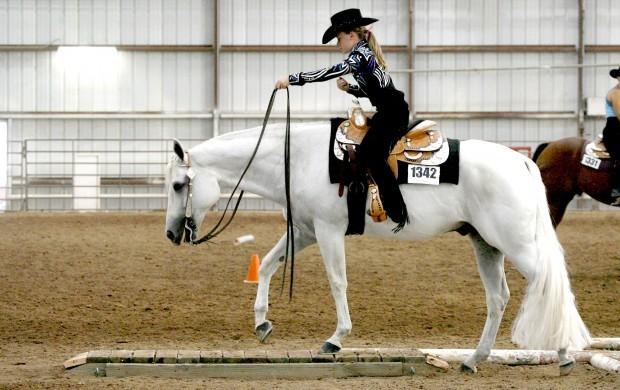 Fall Wallpaper Horses Photo Gallery Quarter Horse Show Events Tucson Com