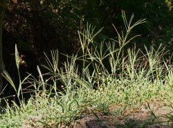Small Of How To Kill Bermuda Grass