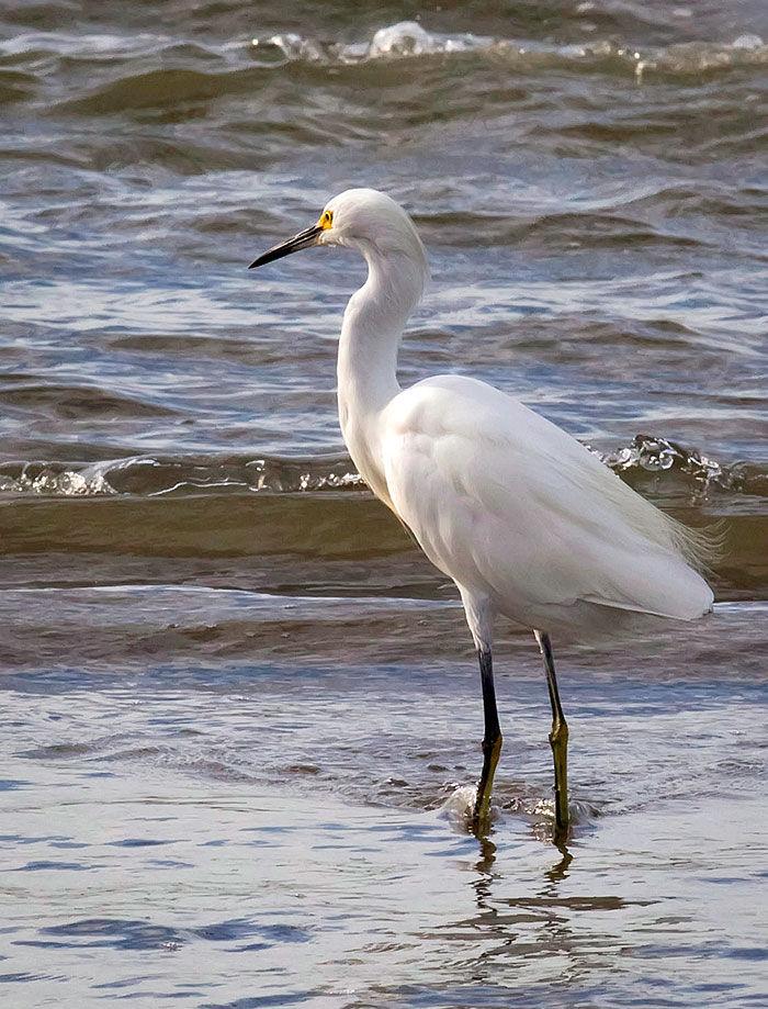 Tides 101 Learning the basics of coastal tides Lifestyle The