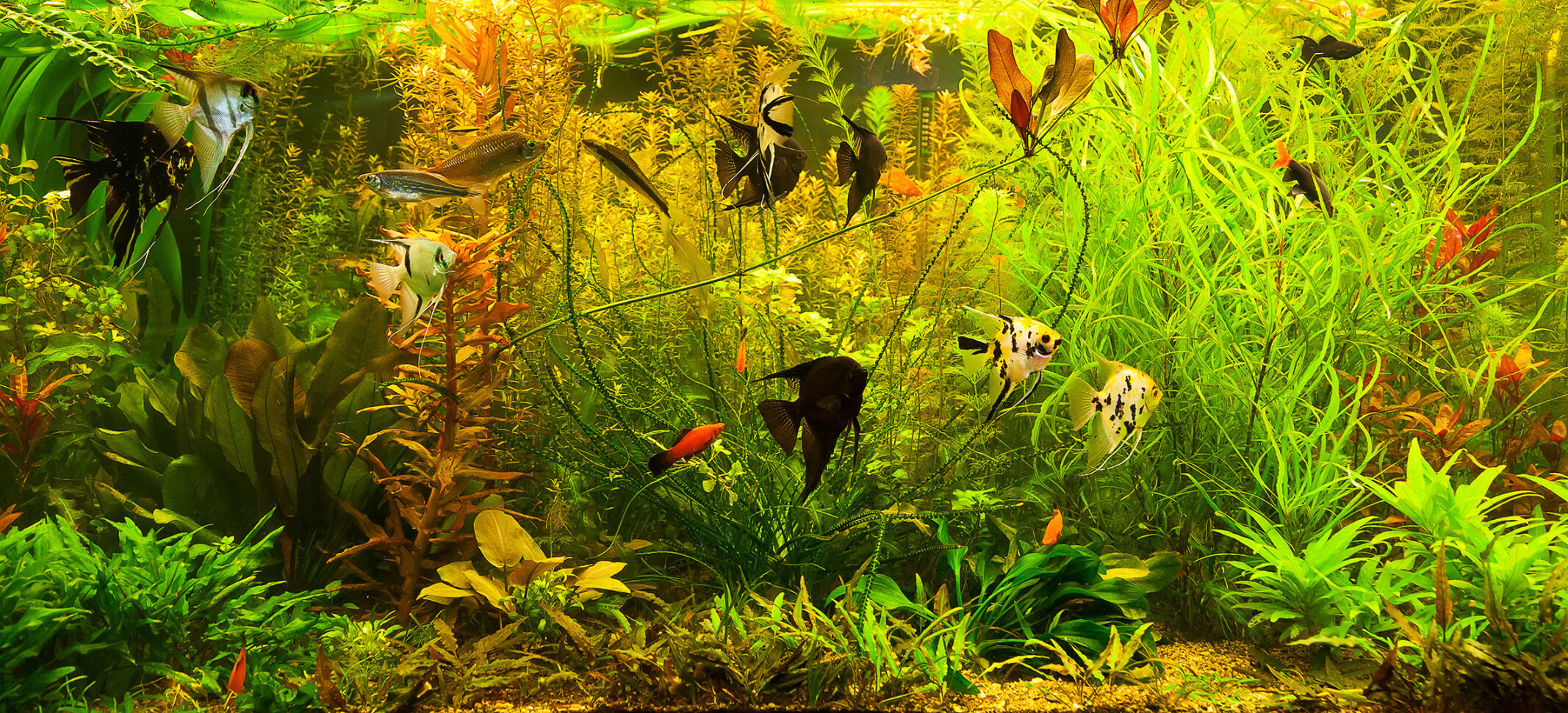 Are Consumers Turning To The Aquarium Hobby Right Now Current Issue Petproductnews Com