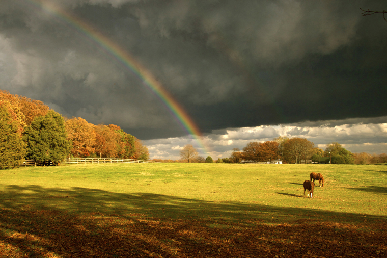 Horses In The Fall Wallpaper Virginia S Timeless Scenic Beauty Entertainment