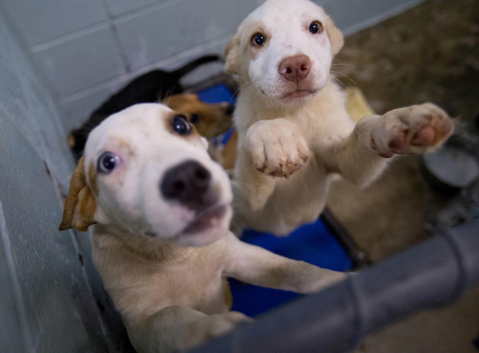 Fullsize Of Lexington Animal Shelter