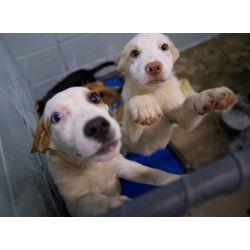 Small Crop Of Lexington Animal Shelter